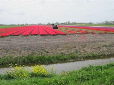 Photo prise dans le Beemster Polder (Pays-Bas), le 10 mai 2013, par Maryse Verfaillie