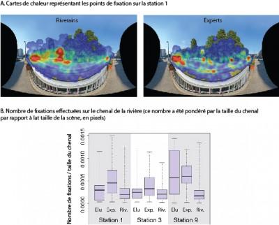 Figure 5: Résultats obtenus grâce à la méthodologie eye-tracking : riverains et experts ne regardent pas le paysage de la même manière, les seconds ayant tendance à être davantage focalisés sur le cours d'eau : (d'après Cottet M., Augendre M., Bozonnet M., Brault V., Magnet D., Marchand J., Roux-Michollet D., Trémélo M.-L., Tronchère H., Vaudor L., 2014, «Traquer le regard: vers une caractérisation des bénéfices sociaux induits par les travaux de restauration écologique en territoire urbain», ZABR, Agence de l'eau, action 37, rapport final, 77 p. )