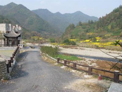 Vallée du Huangshan, du thé et des chrysanthèmes (cliché de Maryse Verfaillie)