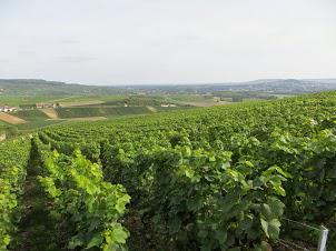 vignole-hautvillers-02